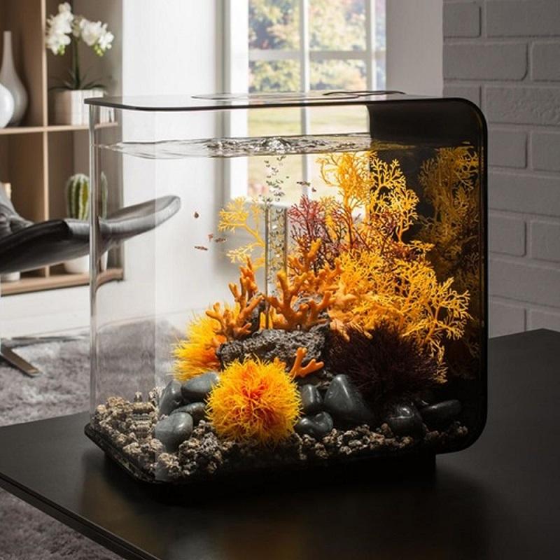 фартук для виды аквариумов для дома фото вернуться прошлое его