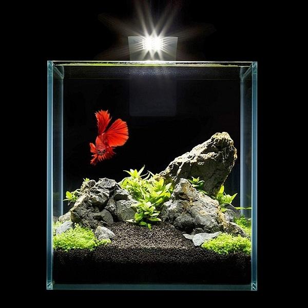 нано аквариум фото своего первого рецепта